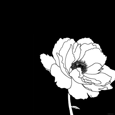 Black And White Flower Photography Prints Black And White Flower Photo